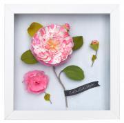 Camellias Frame