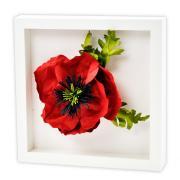 Poppy Frame #2