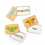 Insect Flash Cards