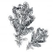 Sizzix 3-D Impresslits Embossing Folder - Oak Leaf by Tim Holtz