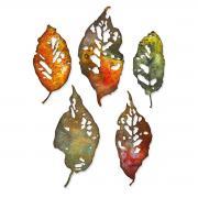 Sizzix Thinlits Die Set 5PK - Leaf Fragments by Tim Holtz